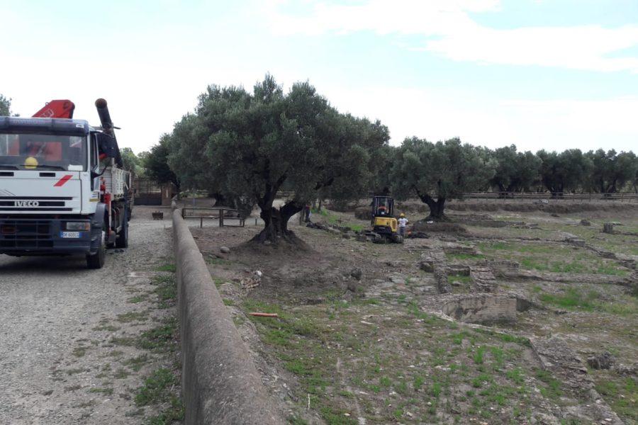 Intervento nel Parco Archeologico Scolacium af21e072 81ba 4d81 b85d ee9e45c9e335 900x600